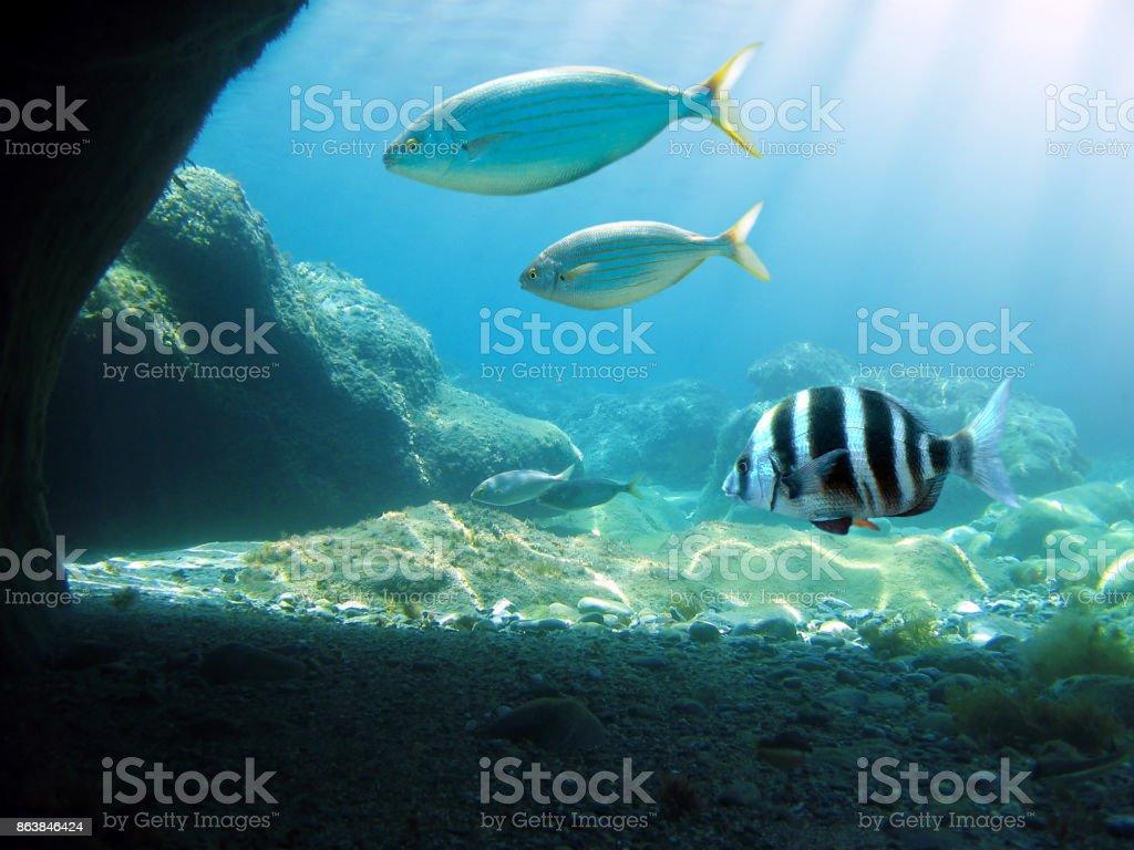 Lumière du soleil sous-marin - Photo