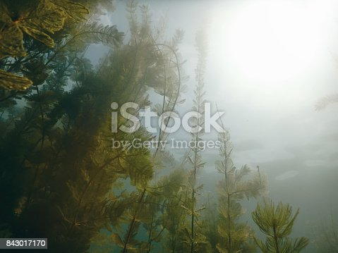 Sunlight Underwater freshwater flora rivers, lakes, pond. Surface.