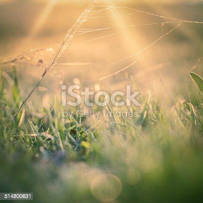 istock Sunlights over cobweb in the field. 514800631