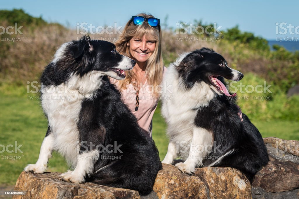 Sunlit beautiful woman with her two Border Collies at a stone wall near the sea. The dogs are looking to the right. stock photo