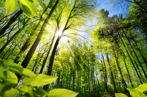 Sunlit foliage in the forest