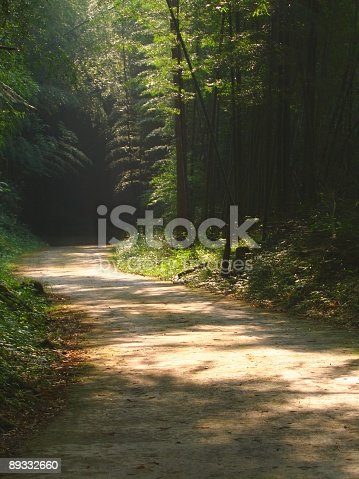 -- a quiet walk through a bamboo forest