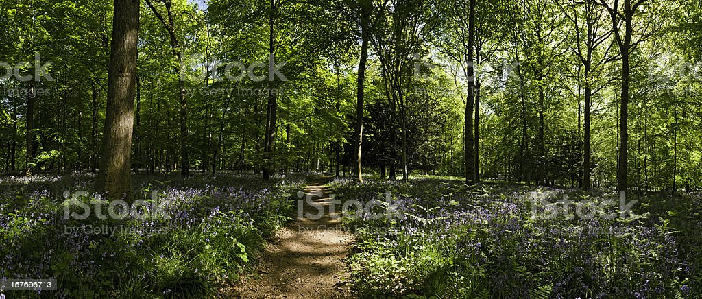 Sunlit forest trail idyllic wilderness wood vibrant flowers foliage panorama stock photo
