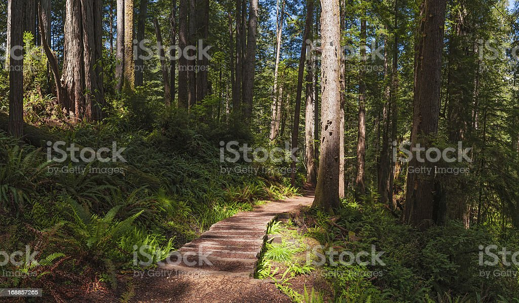 Sunlit forest trail through GIant Redwood grove California USA royalty-free stock photo