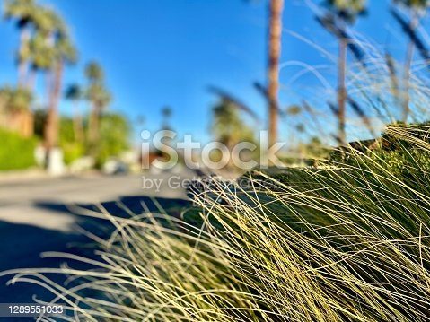 on a walk in downtown - palm springs, ca - usa