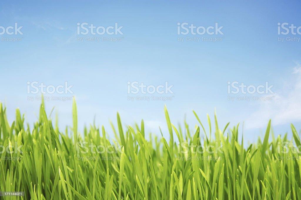 Sunlit grassy field stock photo