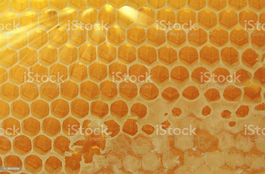 Sunlit honeycomb - Royalty-free Back Lit Stock Photo