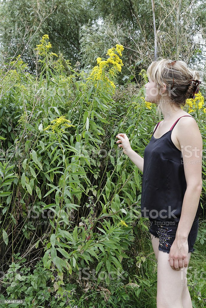 Canadian goldenrod wildflower Solidago candensis with outdoor girl stock photo