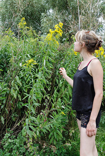 canadian goldenrod wildflower solidago candensis with outdoor girl - whiteway canadian outdoor girl stock photos and pictures