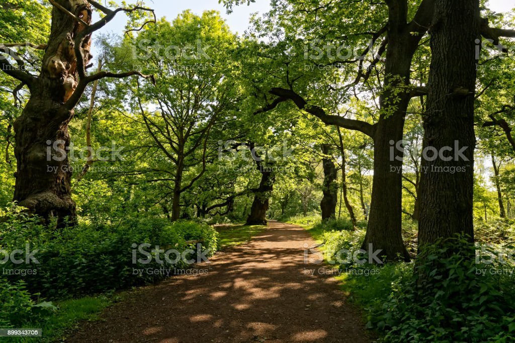 Sunlit path through Sherwood Forest stock photo