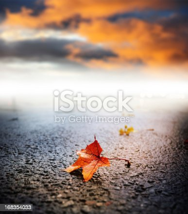 istock Sunlit rain wet autumn leaf on asphalt 168354033