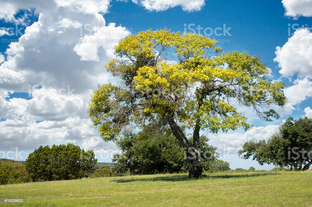 Sunlit Tree stock photo
