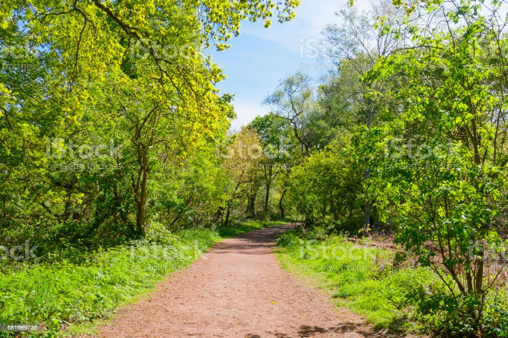 A sunlit wide path between the trees in Sherwood Forest stock photo