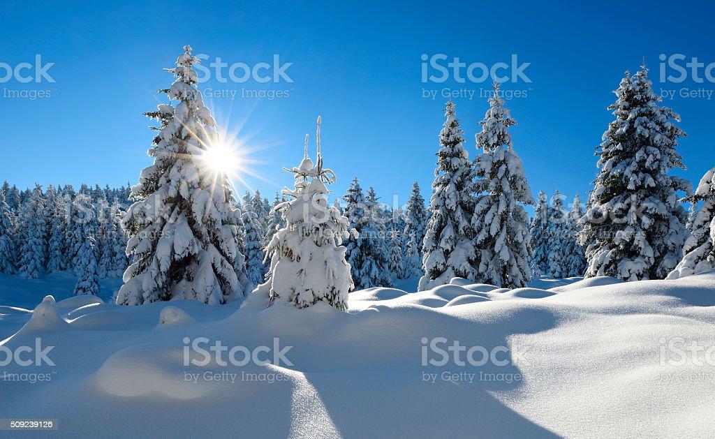 Sonnige Winter Landschaft, Fichte Baum Forest von Schnee – Foto