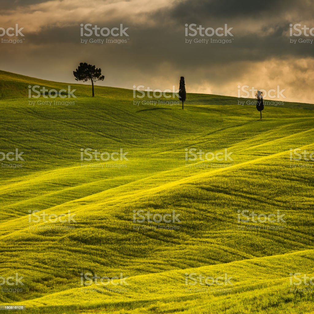 Sunny afternoon in Tuscany royalty-free stock photo