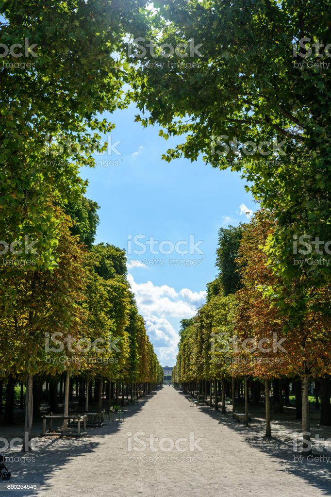 A sunny alley bordered with chestnut trees in the Tuileries garden in Paris at the end of summer stock photo