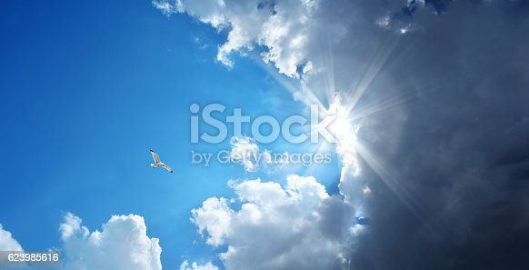 flying seagull over stormy and sunny sky with sunbeam