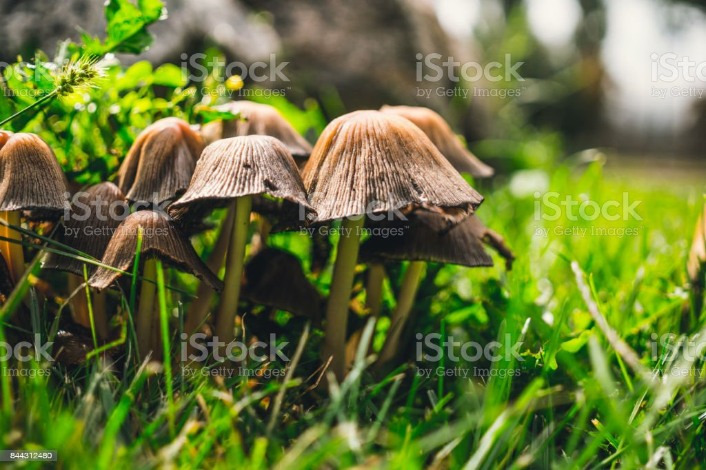 Sunny autumn forest glade. Opyat and green grass stock photo
