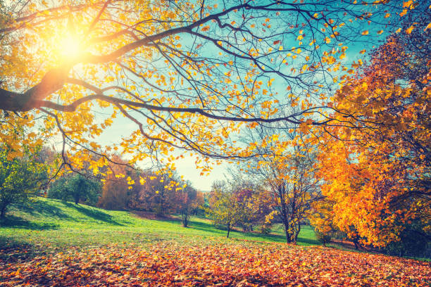 sunny autumn in countryside - deciduous stock pictures, royalty-free photos & images