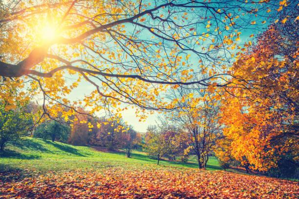 sunny autumn in countryside - autumn foto e immagini stock