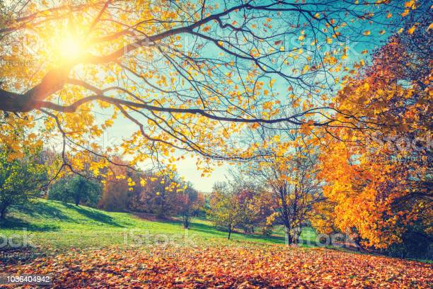 Photo of Sunny autumn in countryside