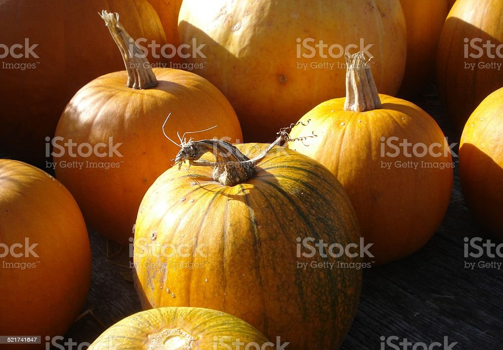 Sunny Autumn Pumpkins stock photo