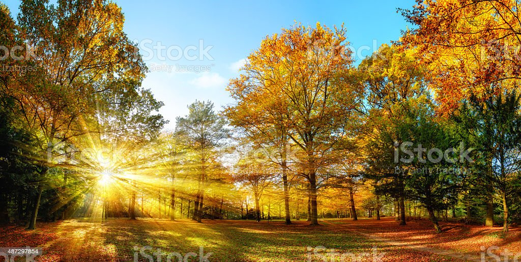 Scenic autumn panorama with the sun shining through the gold foliage...