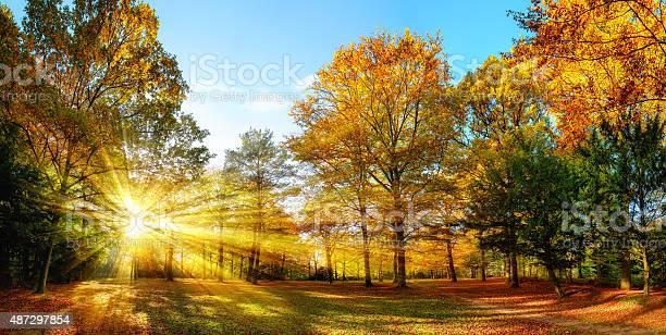 Photo of Sunny autumn scenery in an idyllic park