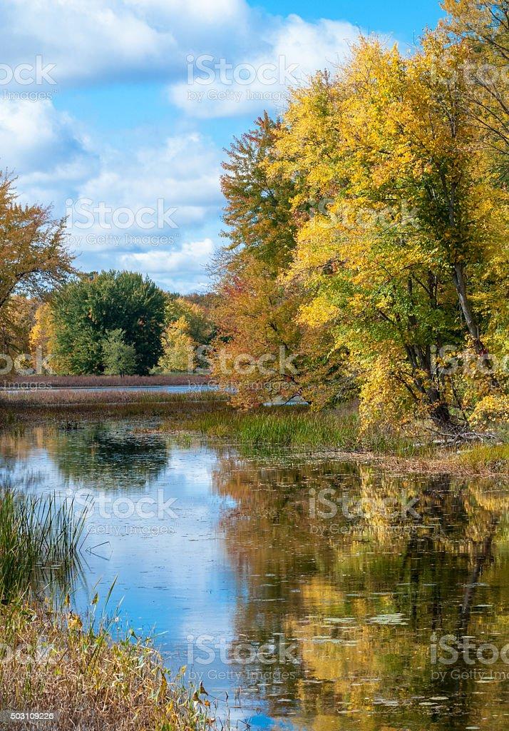 Sunny autumn woods in Petris Island Nature reserve. stock photo