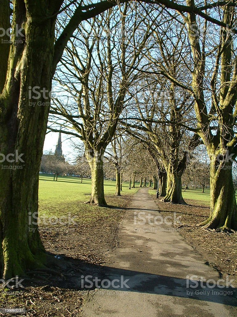 Sunny Avenue royalty-free stock photo