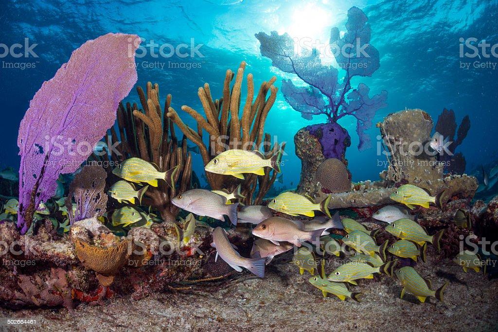 Sunny Bahamas stock photo