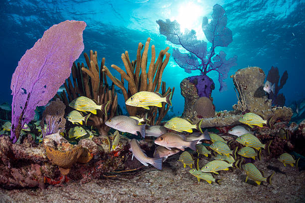Sunny Bahamas Sugar wreck with its coral and fish life shallow stock pictures, royalty-free photos & images