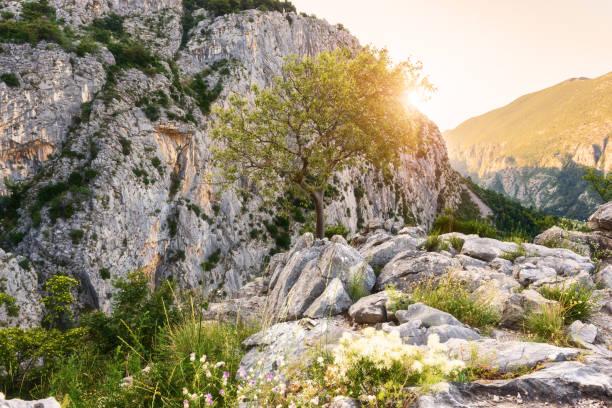 Sonnigen blühende rockt Naturlandschaft – Foto