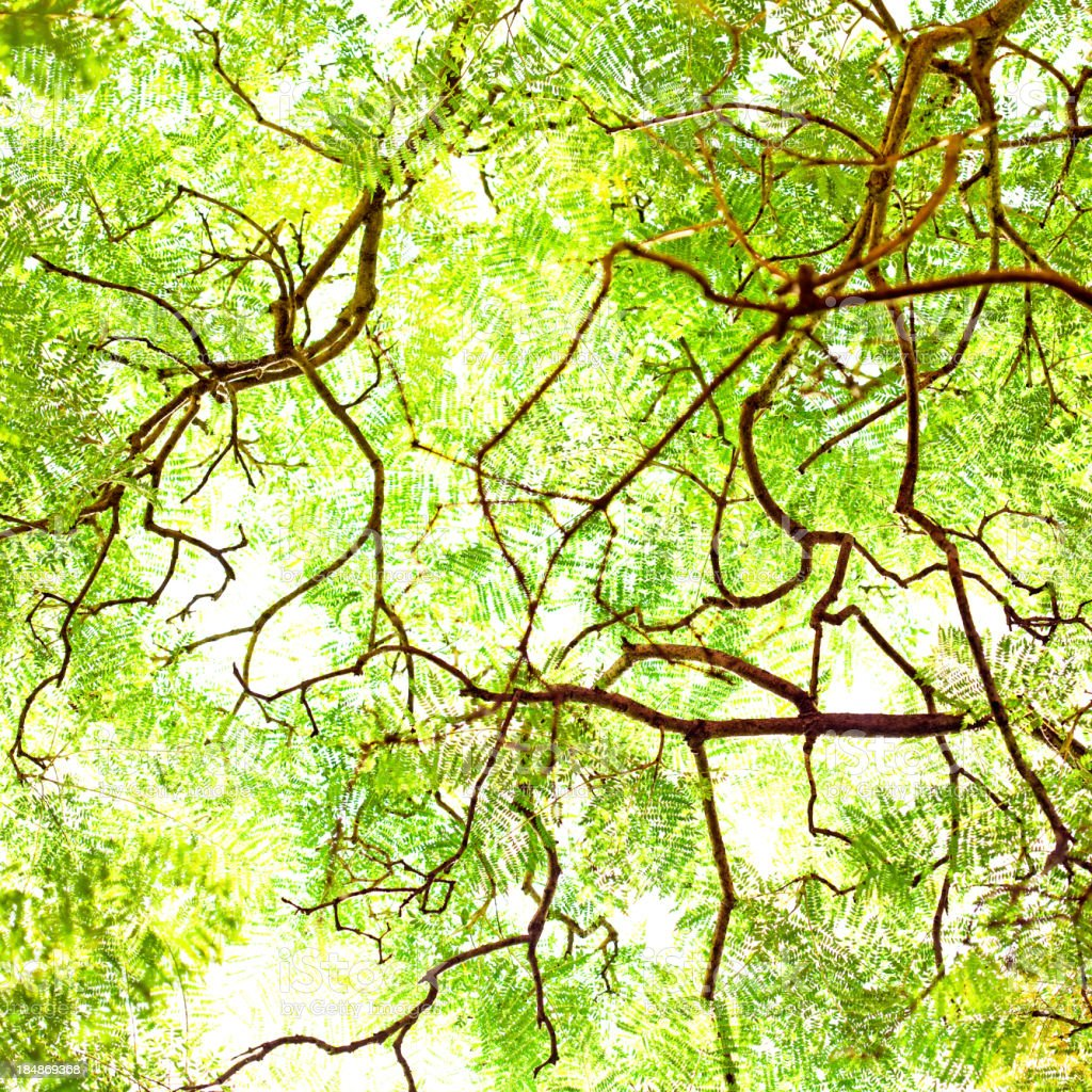 sunny branches royalty-free stock photo