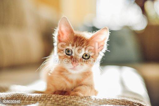 istock Sunny cat 508030340
