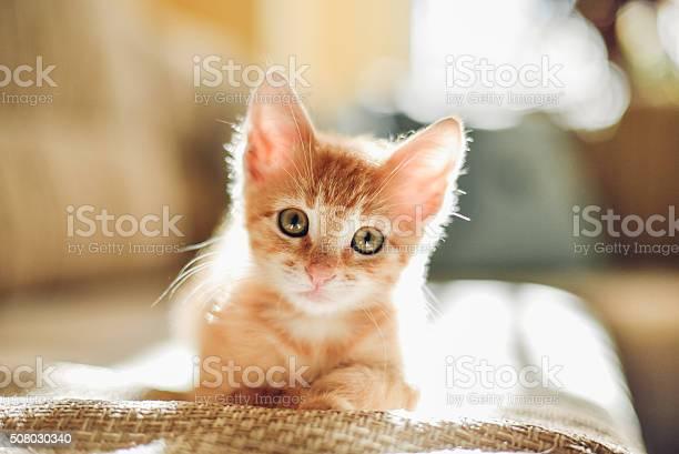 Sunny cat picture id508030340?b=1&k=6&m=508030340&s=612x612&h=jj4nnc5l6pp 0ylppurcbkh0vx0bsfil41mhwgnoej4=