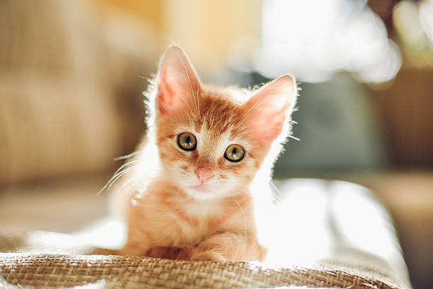 sunny cat - cute stock pictures, royalty-free photos & images