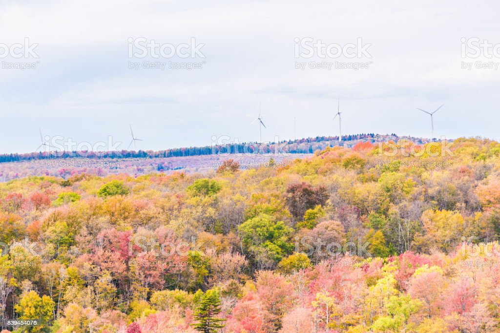 Sunny colorful red forest during autumn on mountain in West Virginia with wind turbines stock photo