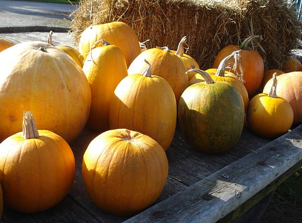 Sunny Country Pumpkins stock photo