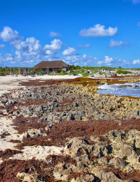 Sunny day, El Mirador beach. Marine coral and sharp stones, dangerous to walk. Cozumel southern tip ( El Mirador ) stock photo