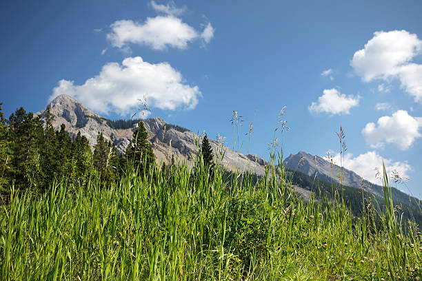 Sunny day in a mountain meadow stock photo