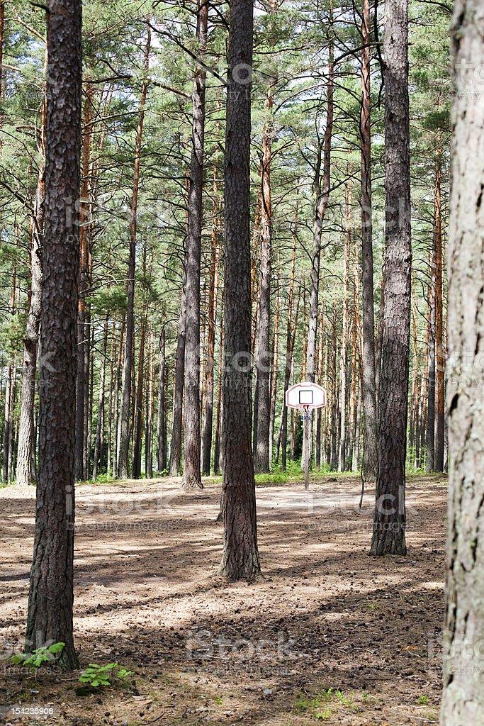 Sonnigen Tag im Wald – Foto