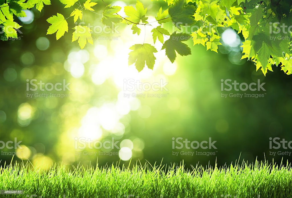 sunny day in forest stock photo