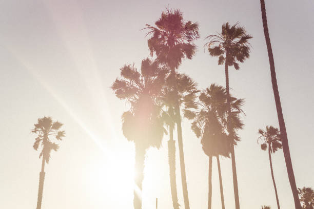 Sunny day in Los Angeles Los Angeles, California. Palms in the rays of the evening sun. Rest on Venice Beach hollywood boulevard stock pictures, royalty-free photos & images