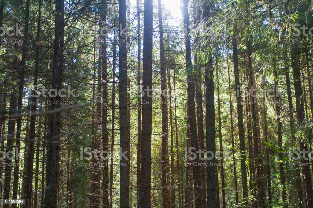 sunny day in the forest stock photo