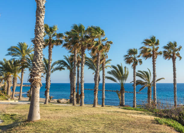 sunny day in the resort of Paphos, Cyprus stock photo