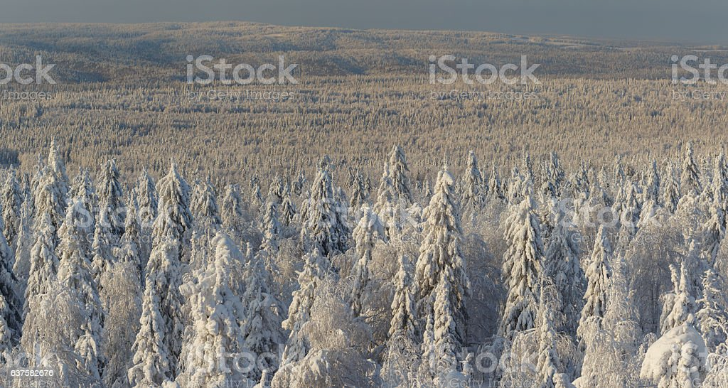 sunny day in winter forest, ural mountains, winter forest, russia stock photo