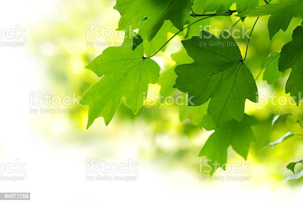 Sunny Day Stock Photo - Download Image Now