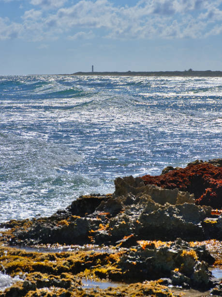 Sunny day with rough sea. Marine coral and sharp stones, dangerous to walk. In the background Celarain Lighthouse. Cozumel southern tip - Cozumel stock photo