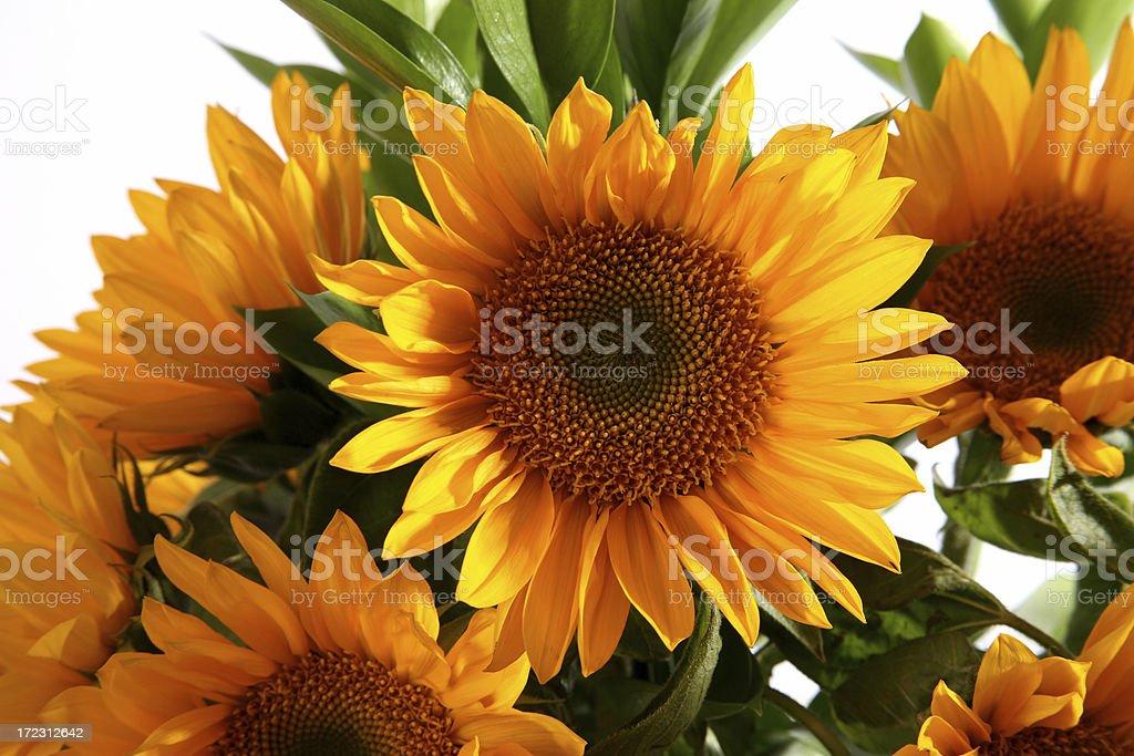 Sunny delight royalty-free stock photo